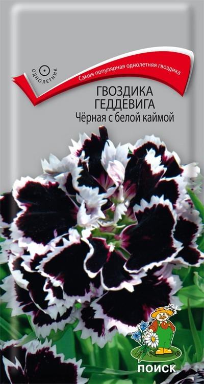 Однолетник Гвоздика Геддевига Черная с белой каймой ЦВ Поиск