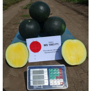 Арбуз MS 1003 F1 Atakama Seeds