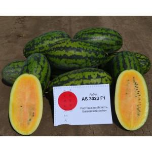 Арбуз AS 3023 F1 Atakama Seeds