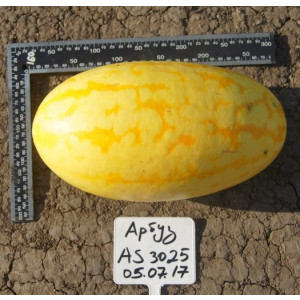 Арбуз AS 3025 F1 Atakama Seeds