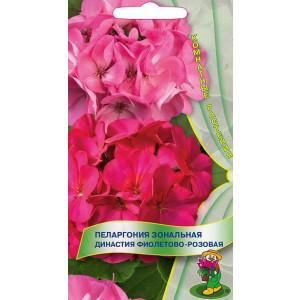 Комнатные Пеларгония зон. Династия Фиолетово-розовая ЦВ Поиск