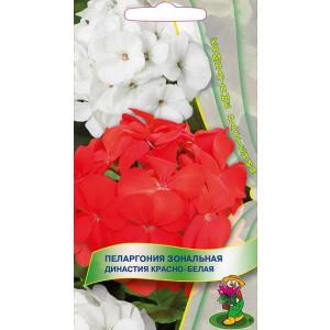 Комнатные Пеларгония зон. Династия Красно-белая ЦВ Поиск