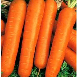 Морковь гранулир. НАСТЕНА Гавриш