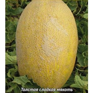 Дыня ФАНТАЗИЯ ЦВ Поиск
