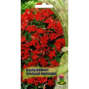 Комнатные Бальзамин Красная милашка ЦВ Поиск
