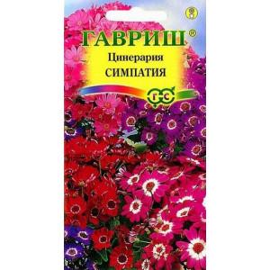 Комнатные Цинерария цветущая гибридная Симпатия Гавриш