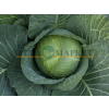 Капуста белокочанная ОУТЕМ КВИН F1 / OTEM KVIN F1 (упаковка 2500 семян) Takii Seeds