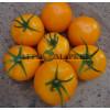 Томат ГОЛД F1 / GOLD F1 Quality Seeds  фото 3