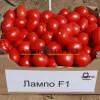 Томат ЛАМПО F1 / LAMPO F1 Nunhems  фото 2