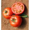 Томат РЭД ХАРВЕСТ F1 / RED HARVEST F1 Quality Seeds  фото 6