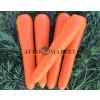 Морковь ВАК 70 F1 / VAC 70 F1 Vilmorin
