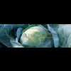Капуста белокочанная ЮНИОР F1 Syngenta  фото 2