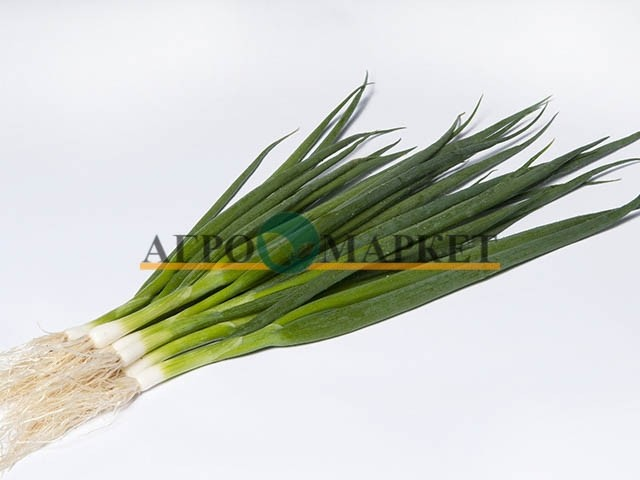 Лук Батун (на перо) ЭСТАФЕТ F1 / ESTAFET F1 Takii Seeds