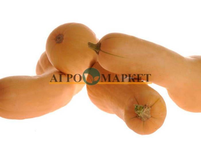 Тыква УЛЬТРА F1 / ULTRA F1 Hollar Seeds