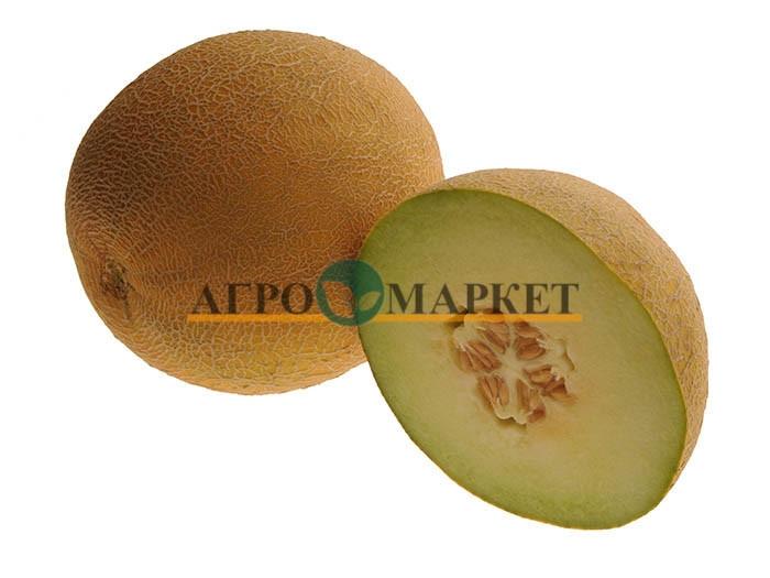 Дыня ПАСПОРТ F1 / PASPORT F1 Hollar Seeds