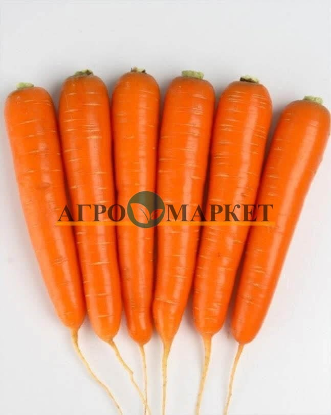Морковь НАТИВА F1 / NATIVA F1 Sakata