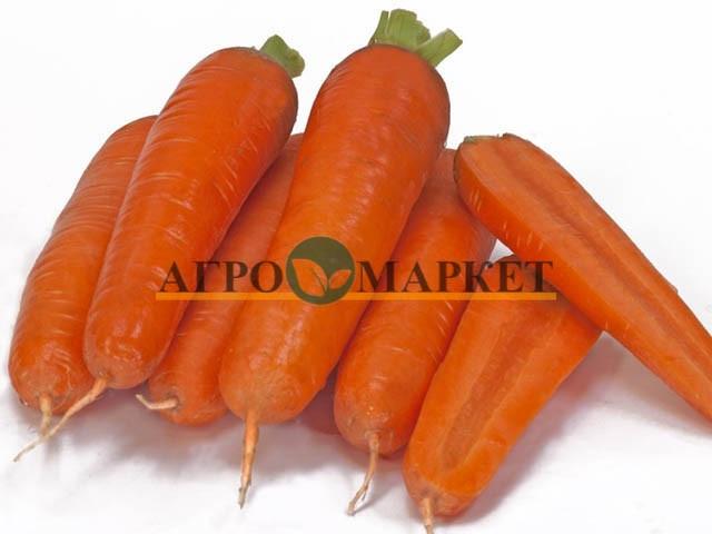 Морковь ТАНГЕРИНА F1 / TANGERINA F1 Takii Seeds