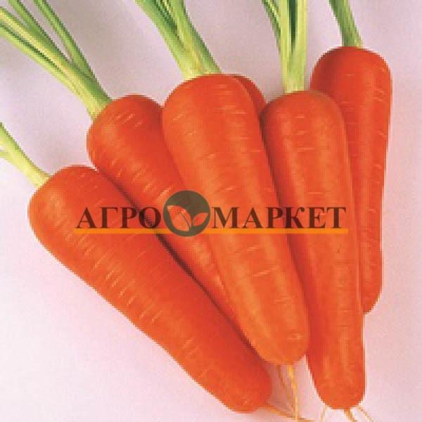 Морковь АБАКО F1 / ABACO F1 Seminis  фото 10