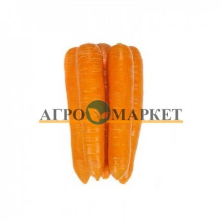 Морковь ФИДРА F1 / FIDRA F1 Rijk Zwaan