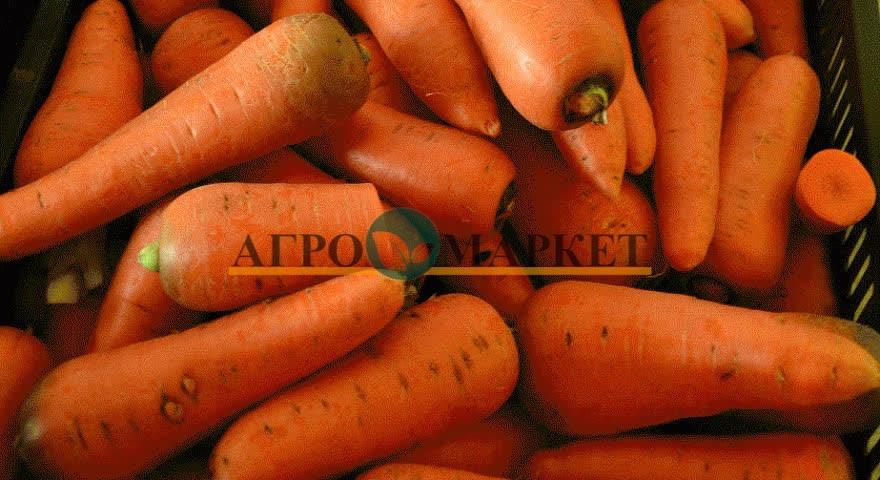 Морковь АБАКО F1 / ABACO F1 Seminis