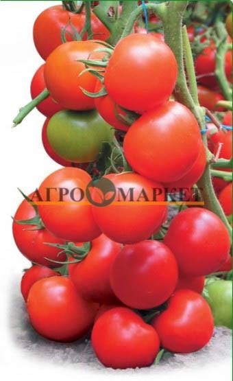 Томат ТАЙЛЕР F1 / TAYLER F1 Kitano Seeds