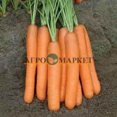 Морковь МОНАНТА / MONANTA Rijk Zwaan