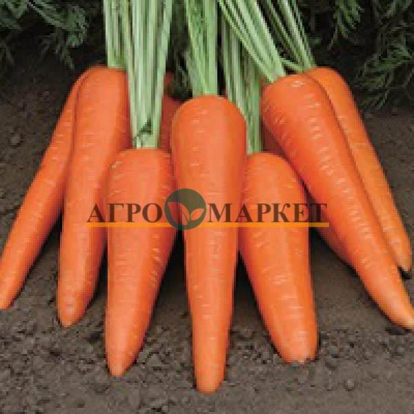 Морковь АБЛЕДО F1 / ABLEDO F1 Seminis