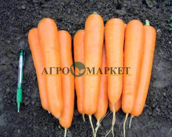 Морковь АТТИЛИО F1 / ATTILIO F1 Vilmorin
