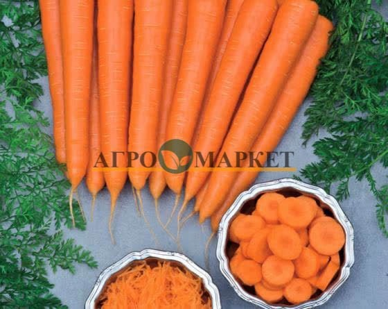 Морковь ВОЛКАНО F1 / VOLCANO F1 Vilmorin