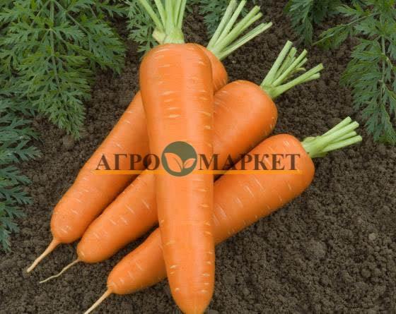 Морковь ОЛИМПО F1 / OLIMPO F1 Vilmorin