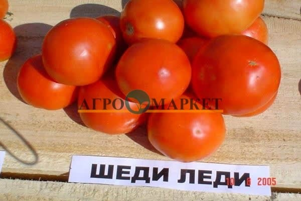 Томат ШЕДИ ЛЕДИ F1 / SHADY LADY F1 Nunhems