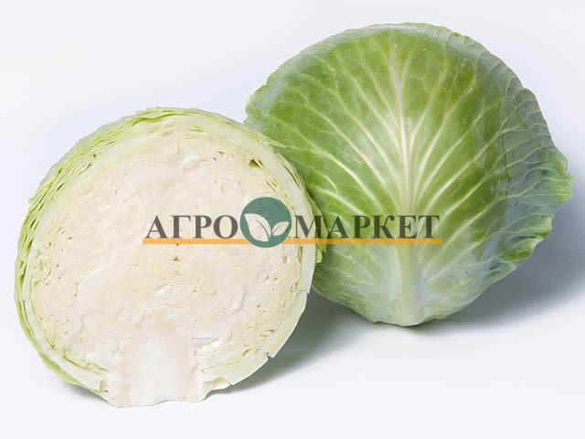 Капуста белокочанная ПРОНКА F1 / PRONKA F1 Takii Seeds
