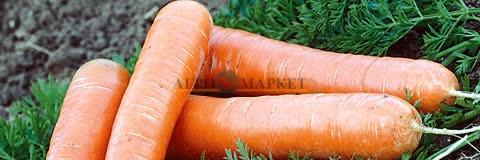 Морковь НАТАЛЬЯ F1 / NATALYA F1 Syngenta  фото 2