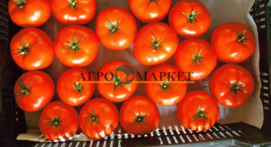 Томат МАРТЭЗ F1 / MARTEZ F1 Seminis  фото 10