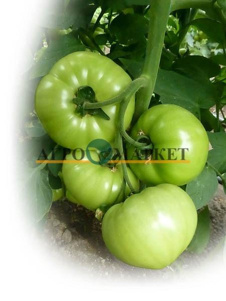 Томат ОСУМИ (KC 10) F1 / OSUMI (KS 10) F1 Kitano Seeds