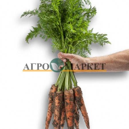 Морковь ВАРМИЯ F1 / VARMIA F1 Rijk Zwaan