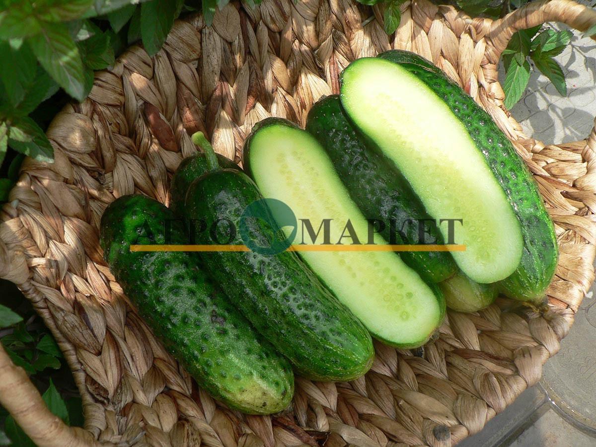 Огурец МАЛИКА F1 / MALIKA F1 Quality Seeds