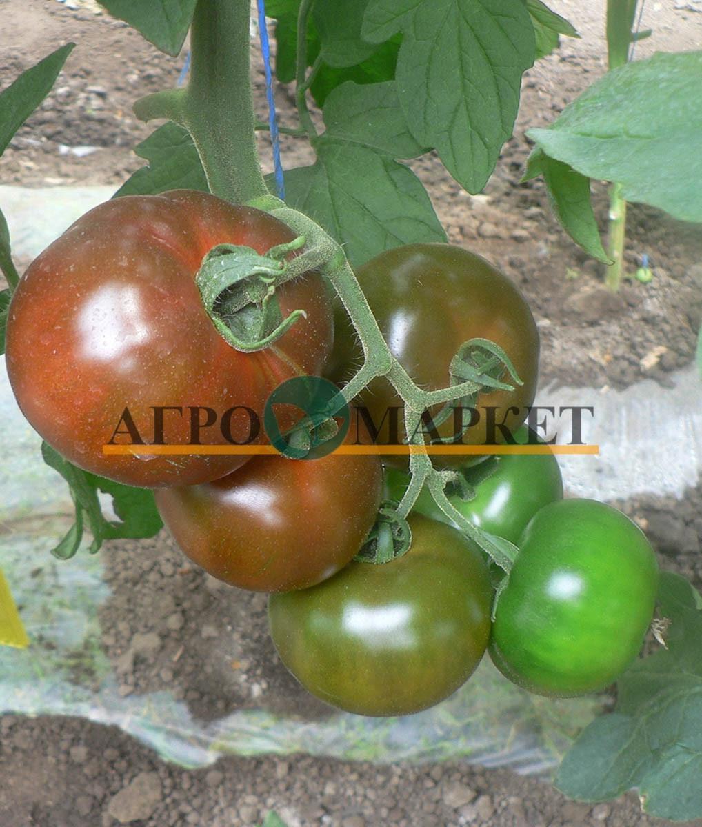 Томат АФРИКА F1 / AFRIKA F1 Quality Seeds  фото 2