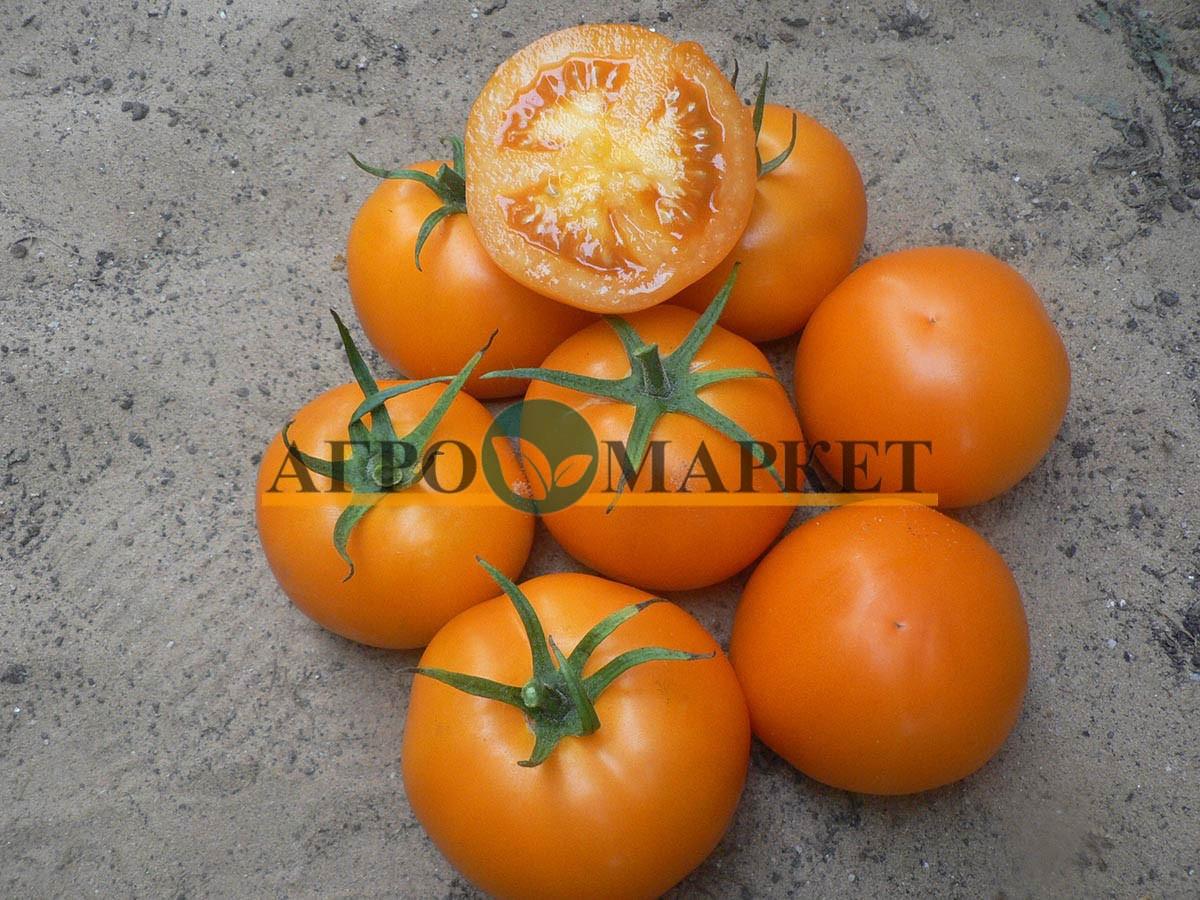 Томат ГОЛД F1 / GOLD F1 Quality Seeds  фото 2