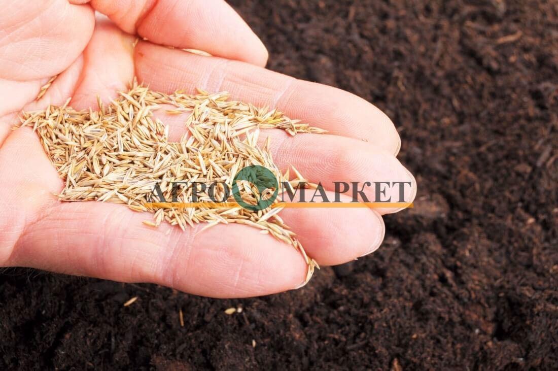 Газонная трава МУЛЬТИ ГРИН / MULTI GRIN Абсолют Грин