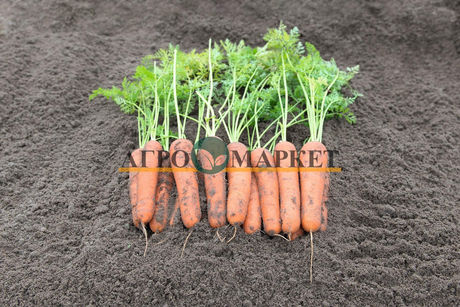 Морковь НИРИМ F1 / NIRIM F1 Bejo