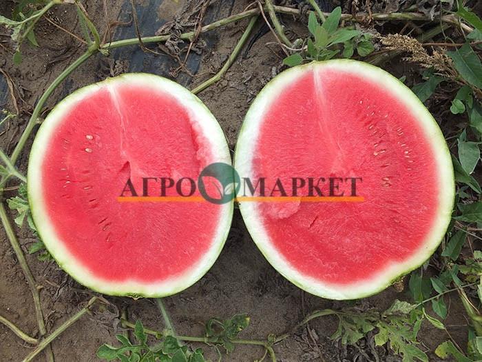 Арбуз ТИГРОВЫЙ ГЛАЗ F1 / TIGROVIY GLAZ F1 Hollar Seeds