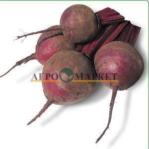 Свекла KS 20 F1 Kitano Seeds