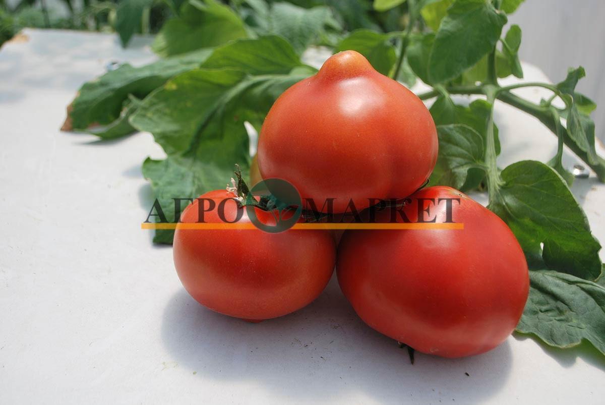 Томат РЭД ХАРВЕСТ F1 / RED HARVEST F1 Quality Seeds