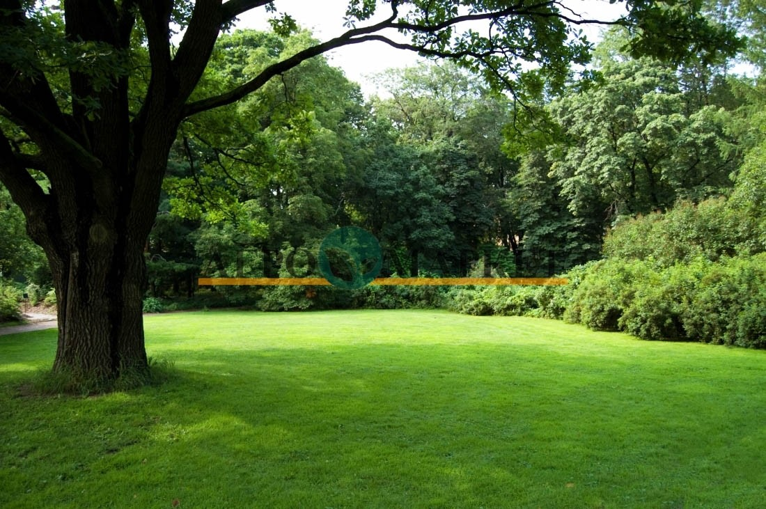 Газонная трава ЗИМА ГРИН / ZIMA GRIN Абсолют Грин  фото 3