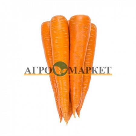 Морковь ВАРМИЯ F1 / VARMIA F1 Rijk Zwaan  фото 4