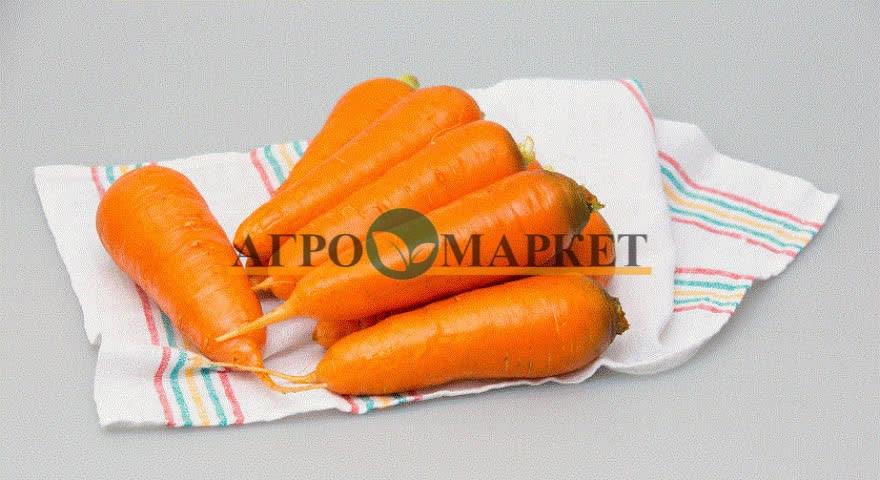 Морковь АБАКО F1 / ABACO F1 Seminis  фото 4