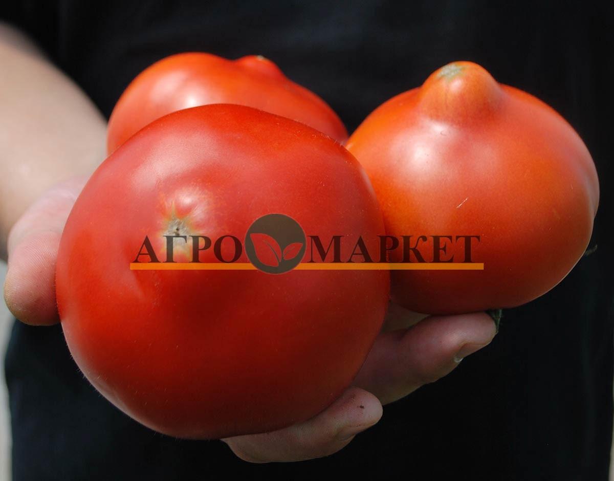 Томат РЭД ХАРВЕСТ F1 / RED HARVEST F1 Quality Seeds  фото 3