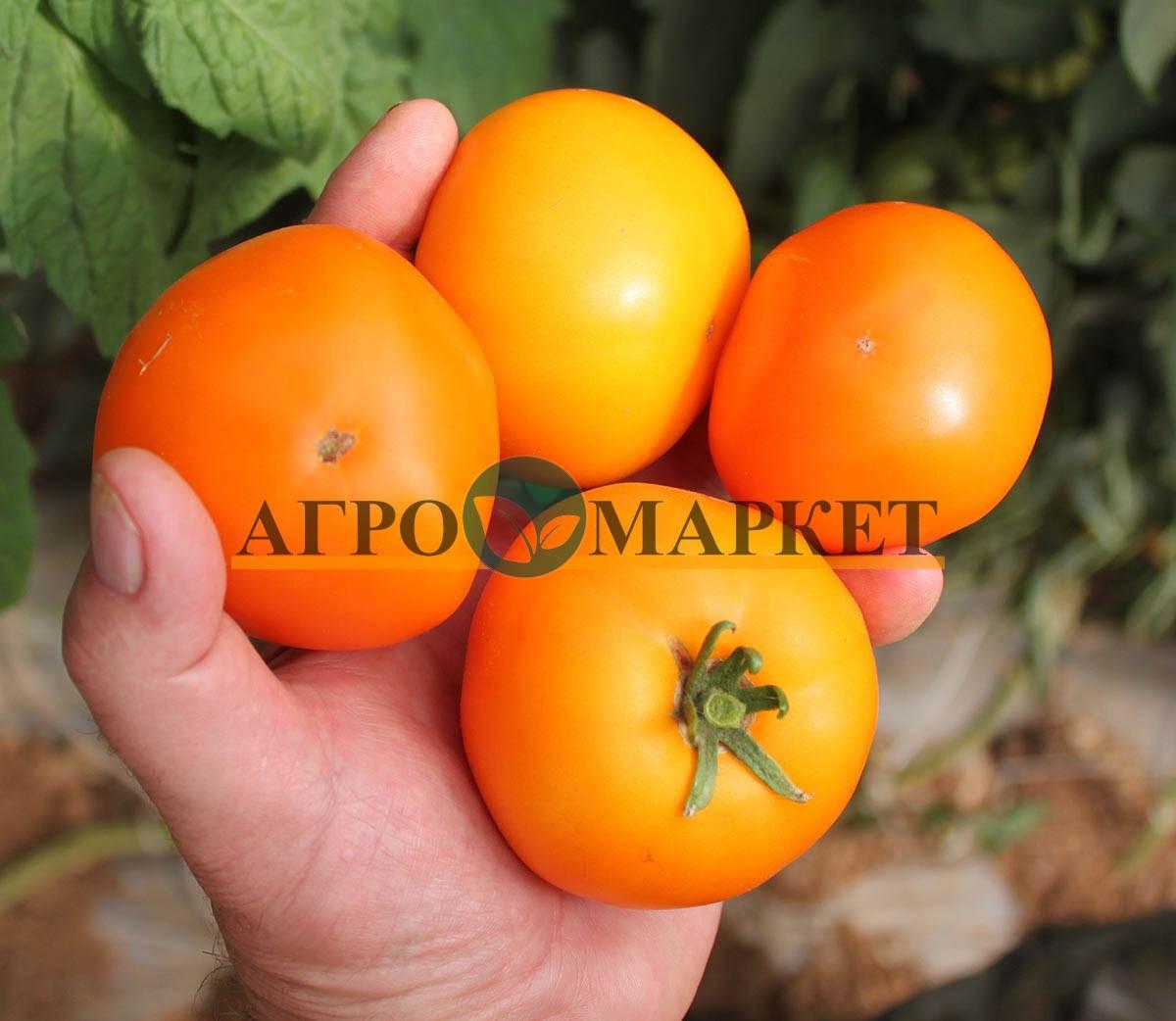 Томат ГОЛД F1 / GOLD F1 Quality Seeds  фото 4