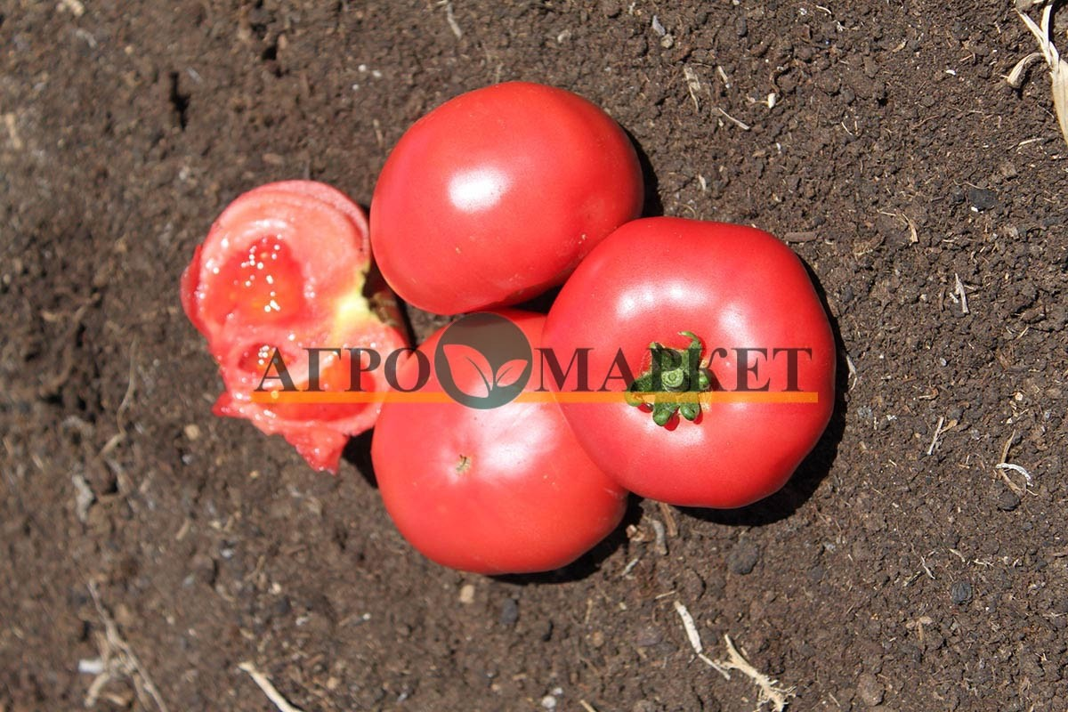 Томат ПИНК МАНИ F1 / PINK MANEY F1 Quality Seeds  фото 5